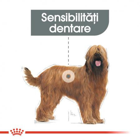 Royal Canin Maxi Dental Care Adult hrana uscata caine pentru reducerea formarii tartrului, 9 kg3