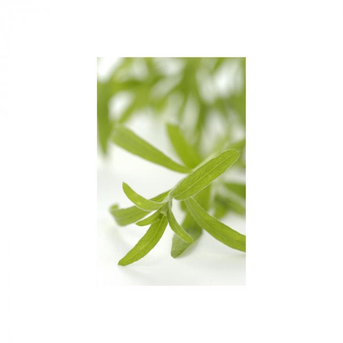 Tarhon Demeter  Lebensbaum 15g [1]