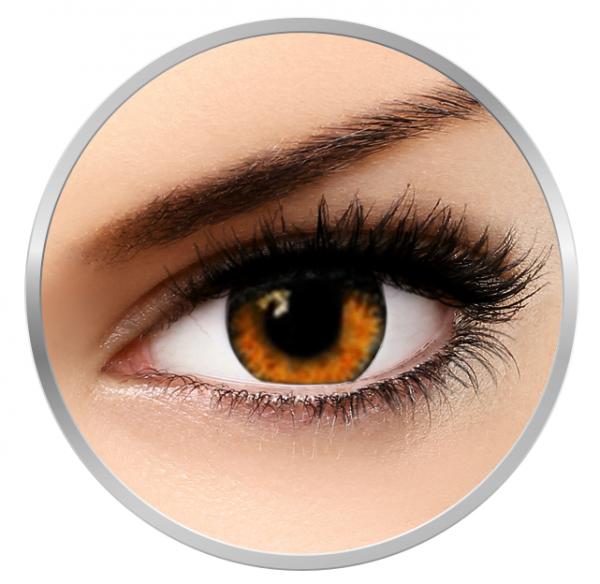 Soleko Queen's Trilogy Amber - Brown Contact Lenses monthly - 30 wears (2 lenses/box)
