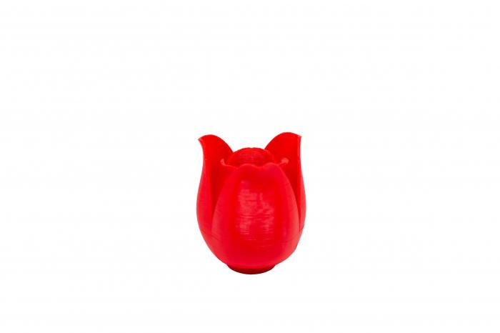 3D Tulip [1]