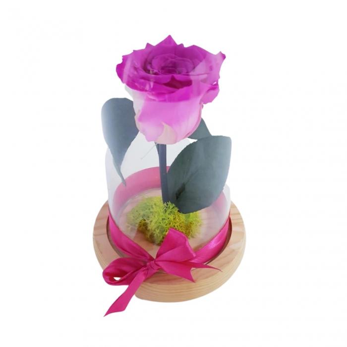 criogenat roz [1]