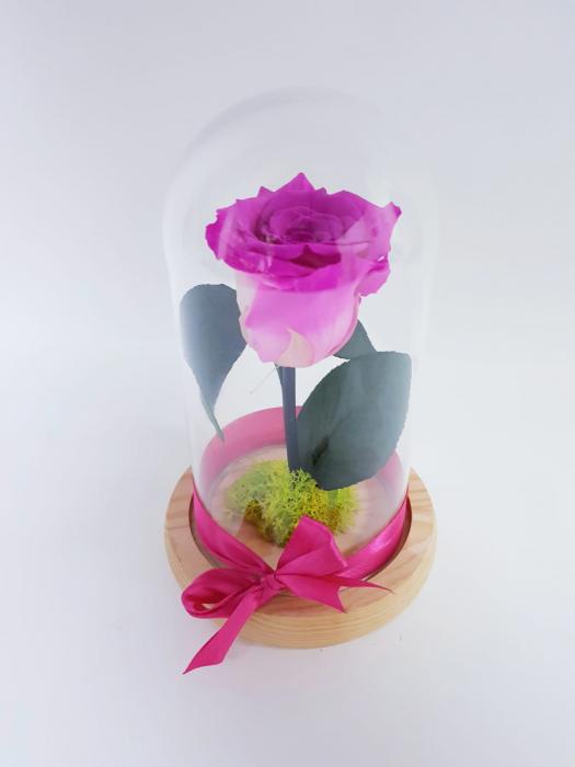 criogenat roz 0