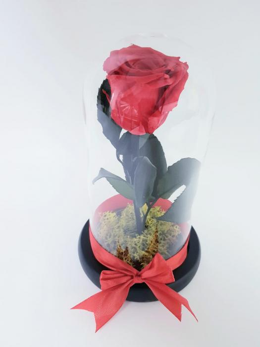 Trandafir criogenat rosu 0