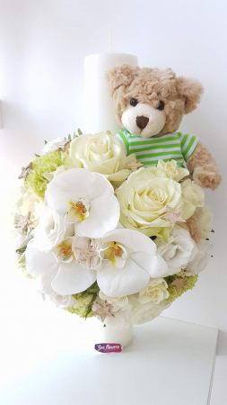 Baby bear [0]