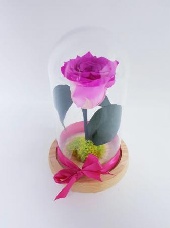 criogenat roz [0]