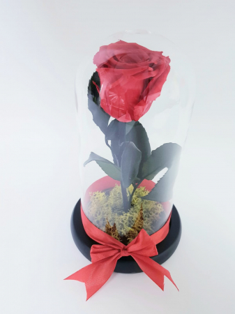 Trandafir criogenat rosu [0]