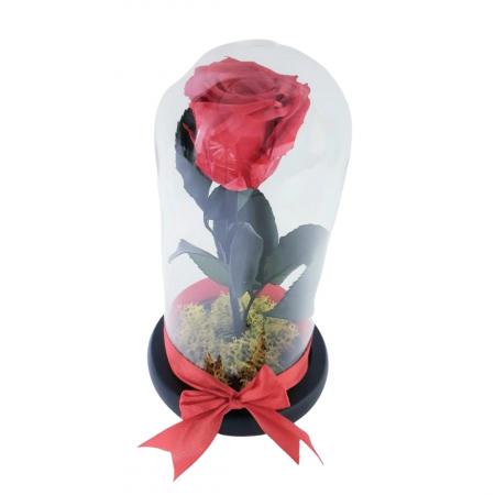 Trandafir criogenat rosu [1]