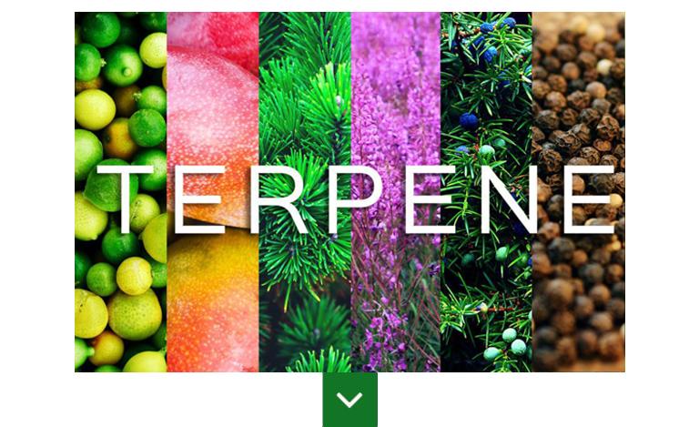 Despre Terpene