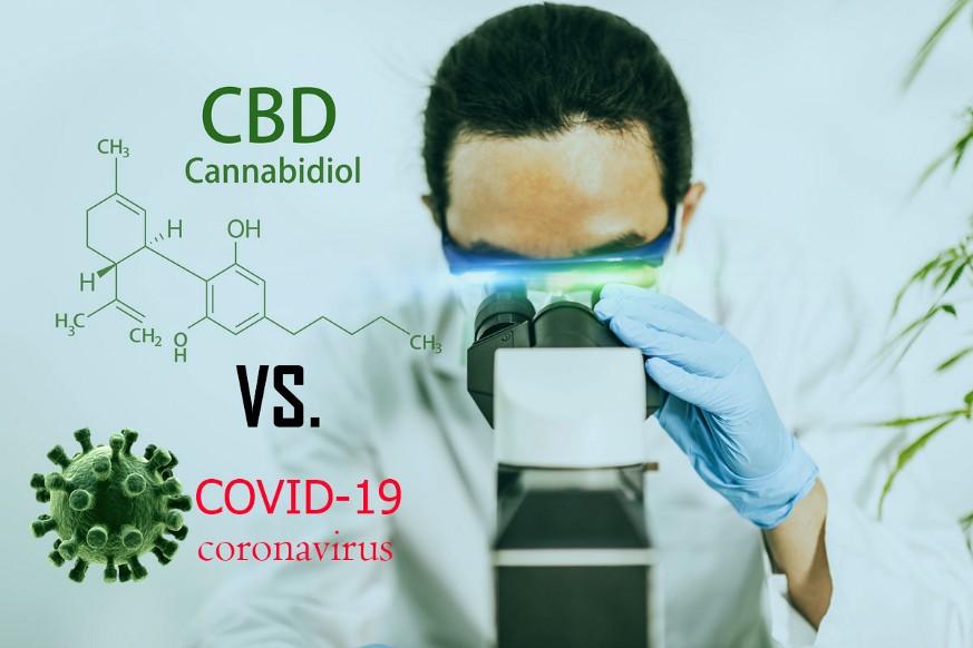 CBD (Canabidiol), eficient impotriva Covid-19?