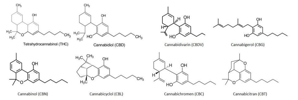Canabinoizi planta canabis CBD THC CBG CBN