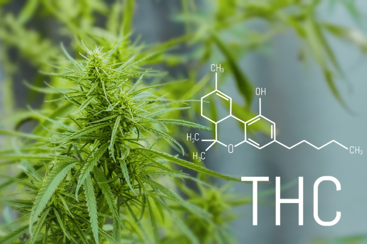 ce este THC tetrahidrocanabinol si diferenta CBD