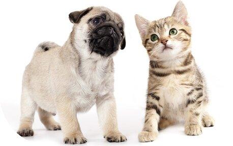 Cum ajuta uleiul CBD cainii pisicile si alte animale de companie