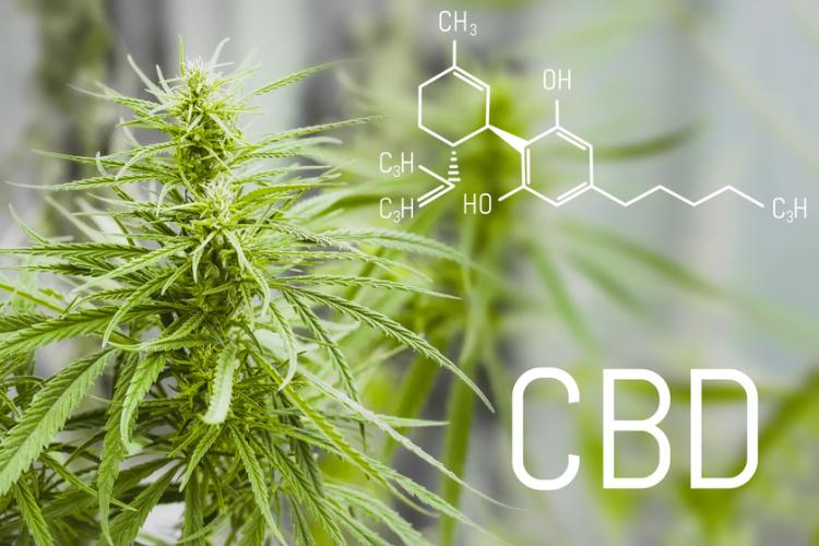 CBD este legal - diferenta dintre THC si cannabidiol
