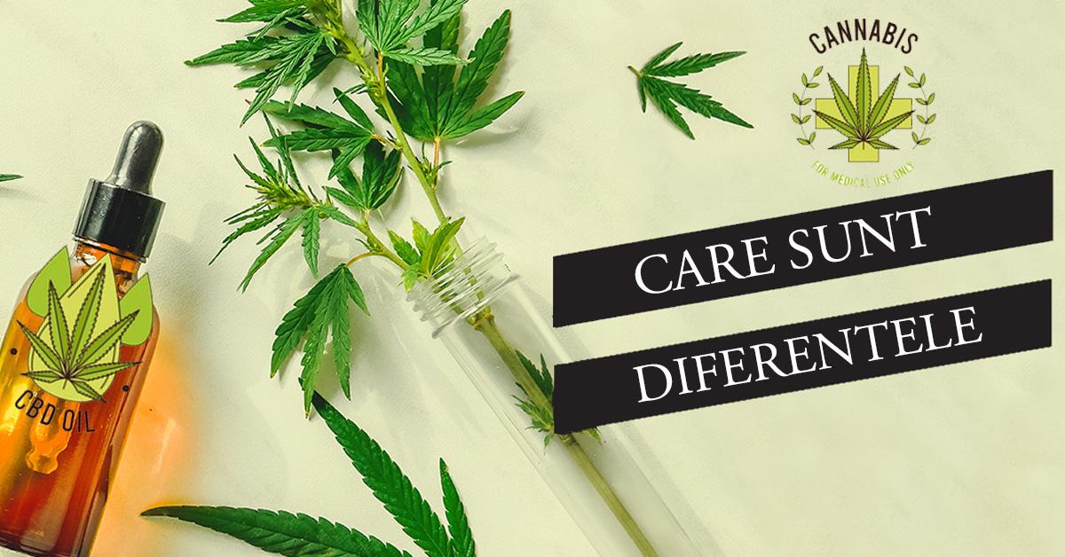 Canabis Medical vs. Ulei CBD - Care sunt Diferentele?