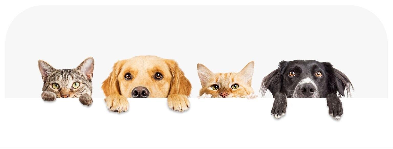 Ghid Ulei CBD pentru caini pisici cai si alte animale de companie