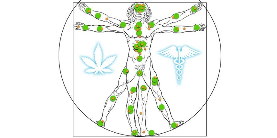 Ce este Sistemul Endocanabinoid