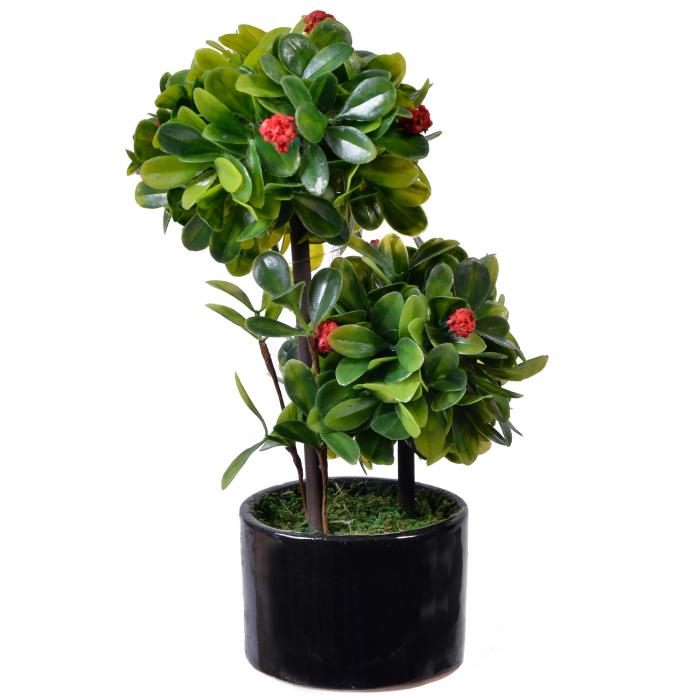 Ghiveci negru cu plantă Bonsai-2 ramuri 0