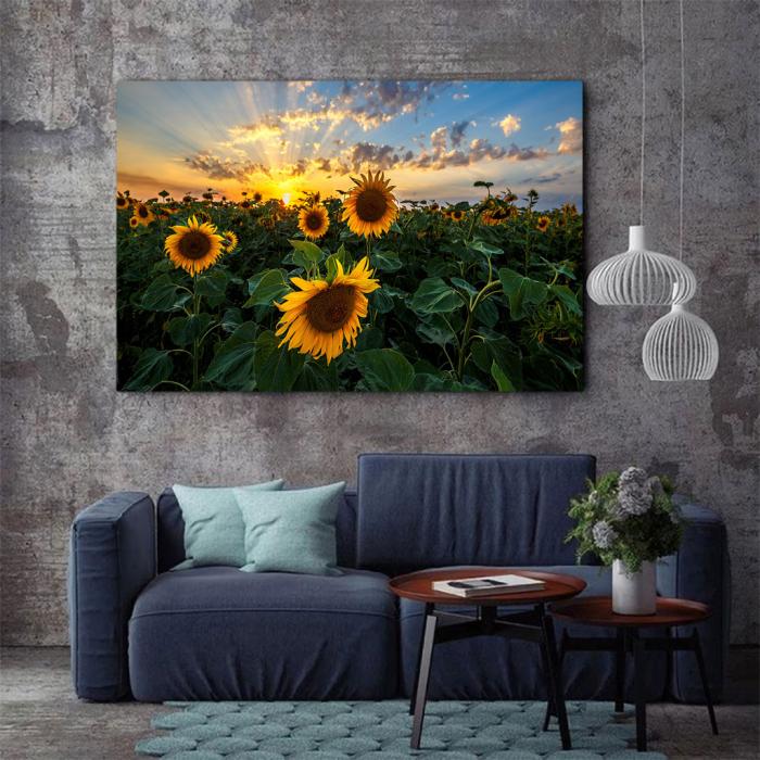 Tablou Canvas - Apus peste Floarea Soarelui 3
