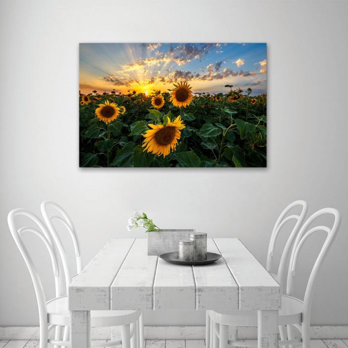 Tablou Canvas - Apus peste Floarea Soarelui 4