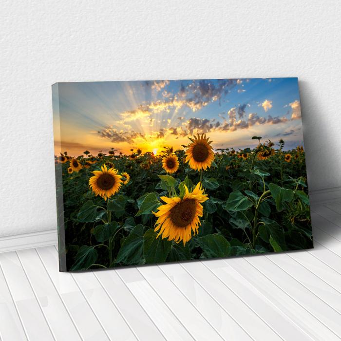 Tablou Canvas - Apus peste Floarea Soarelui 0