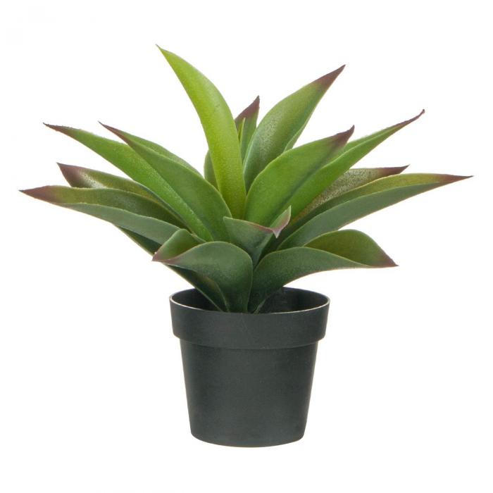 Ghiveci decorativ Aloe Vera - 25cm [0]