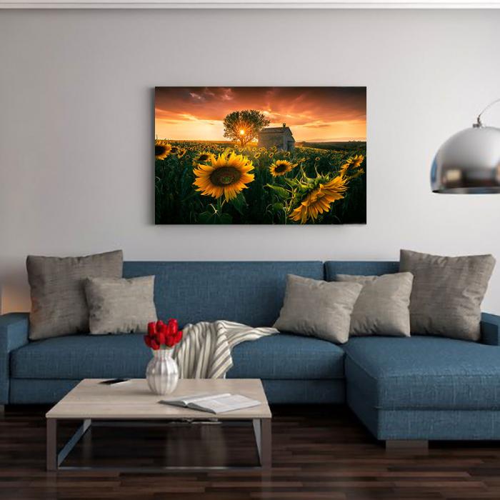 Tablou Canvas - Floarea Soarelui 1