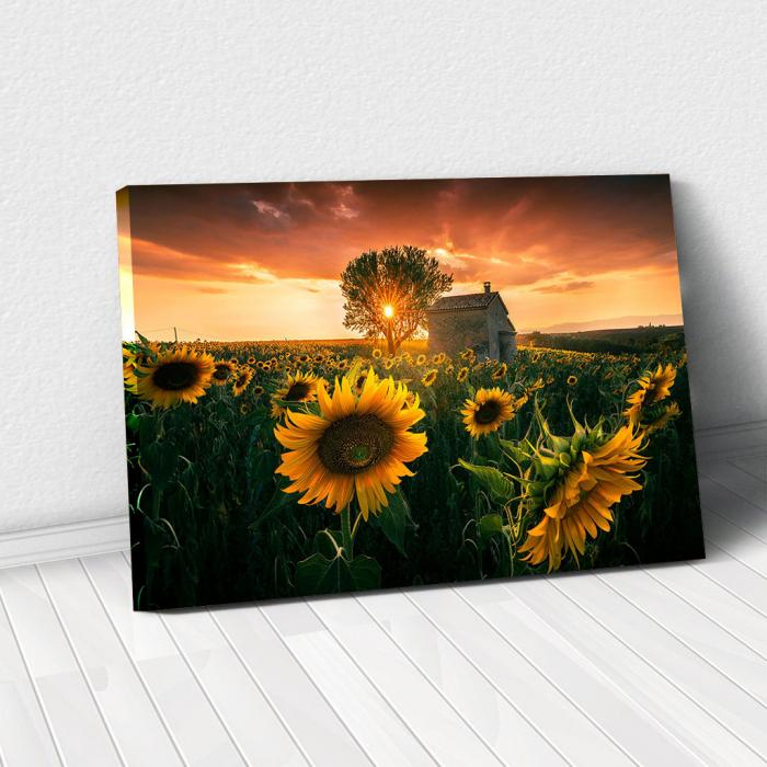 Tablou Canvas - Floarea Soarelui 0