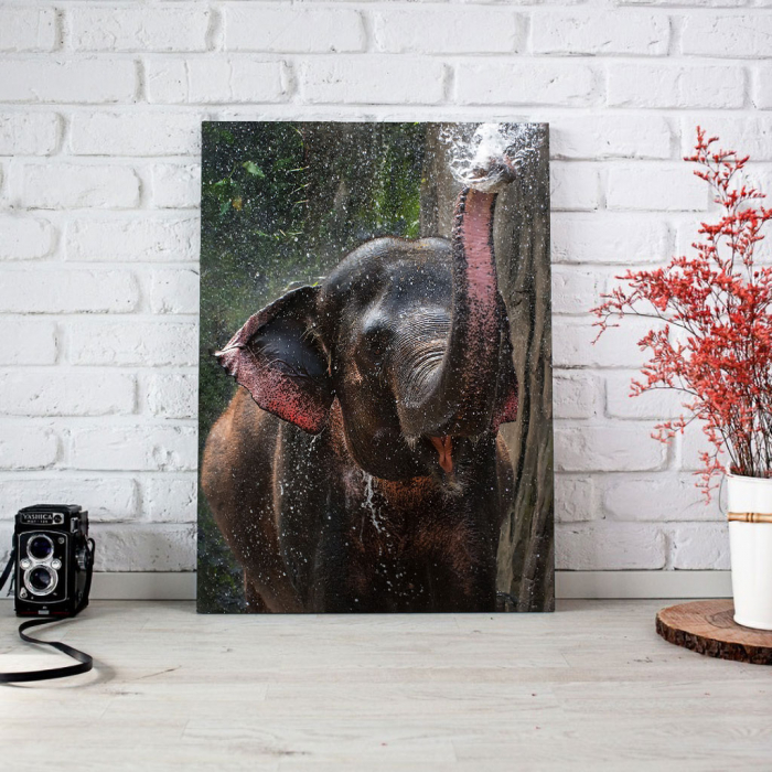 Tablou Canvas - Elephant 1