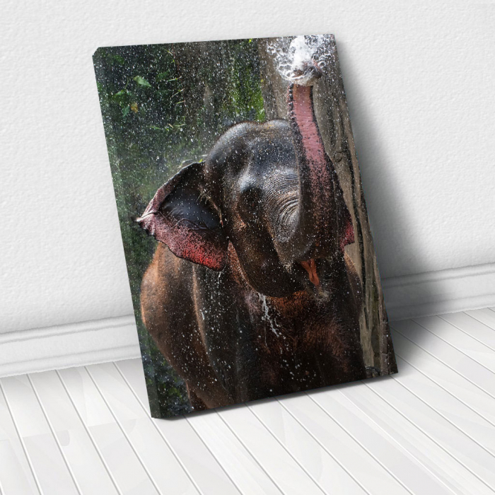 Tablou Canvas - Elephant 0