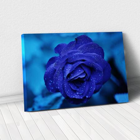 Tablou Canvas -Trandafir Albastru0
