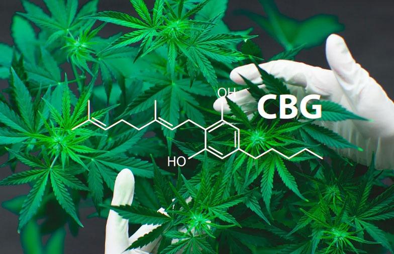 Canabigerolul - CBG