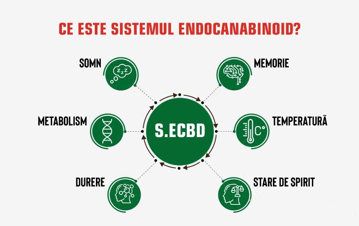 Ce este sistemul endocannabinoid?