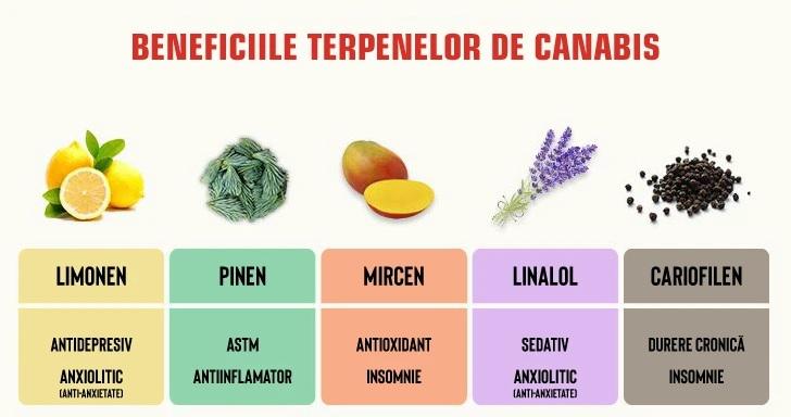 Ce sunt terpenele?