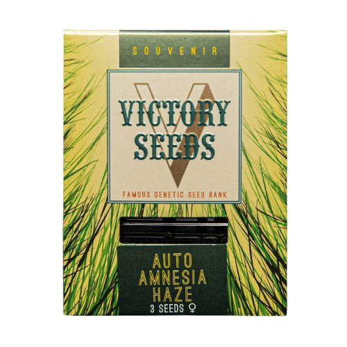 Seminte Cannabis Auto Amnesia Haze Feminized [0]