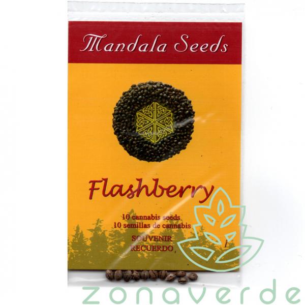 Flashberry Regular, 10 seminte 0