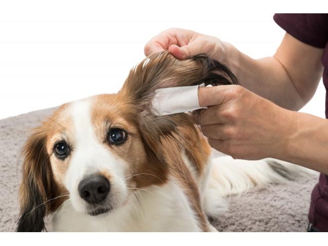 Trixie Servetele de Unica Folosinta pentru Ingrijirea Urechilor Cainilor 50 buc 29392 [2]