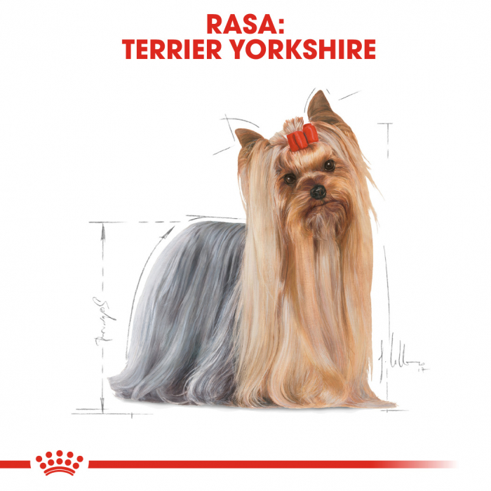 Royal Canin Yorkshire Terrier 12x85g [1]