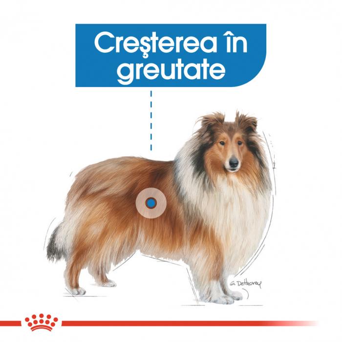 Royal Canin Maxi Light Weight Care [1]