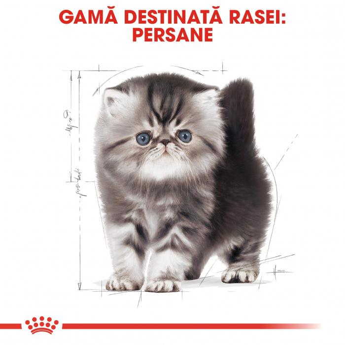 Royal Canin Persian Kitten [2]