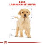 Royal Canin Labrador Retriever Puppy [2]