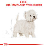 West Highland White Terrier Adult [3]