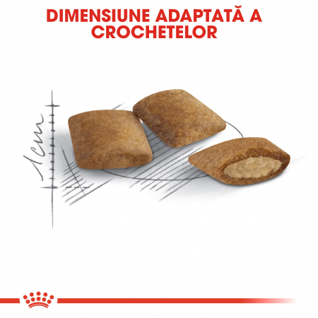 Royal Canin Ageing 12+ [1]