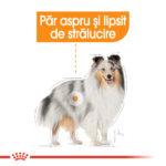 Royal Canin Mini Coat Care [1]