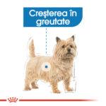 Royal Canin Mini Light Weight Care [1]
