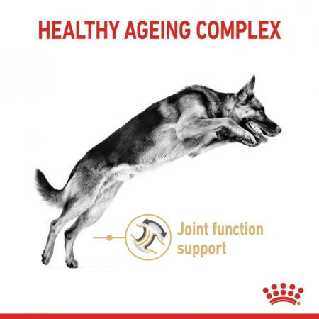 Royal Canin German Shepherd Adult 5+ 12 Kg [1]
