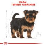 Yorkshire Terrier Puppy [2]