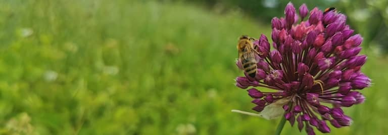 albina polenizare