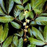 Plante medicinale pentru problemele de fertilitate