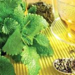 Plante medicinale pentru afecțiunile hepatice și problemele intestinale