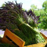 7 beneficii ale uleiului eteric de levănțică